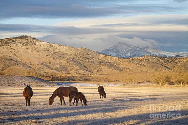 Photograph - Rocky Mountain Colorado Country Morning by James BO Insogna