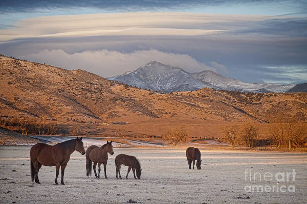 Photograph - Rocky Mountain Country Morning by James BO Insogna