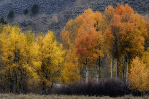 Photograph - Rocky Mountain Fall by Wes and Dotty Weber