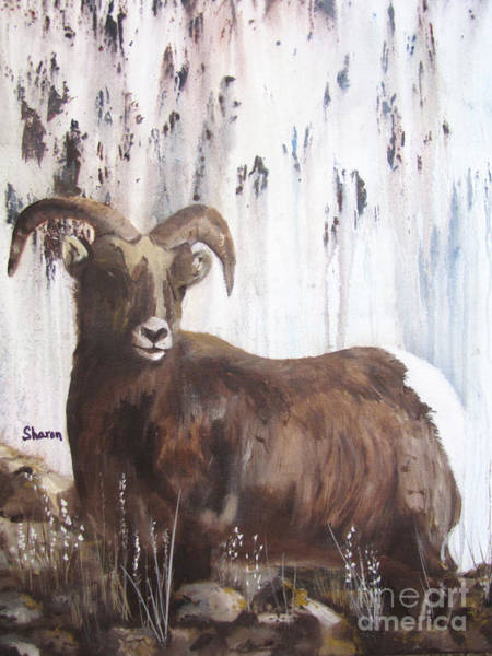 Longhorn Painting - Rocky Mountain High by Sharon Burger