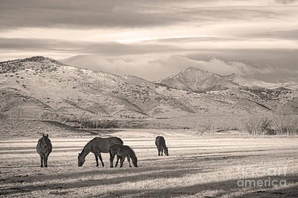 Photograph - Rocky Mountain Longs Peak Colorado Sepia Horse Morning by James BO Insogna