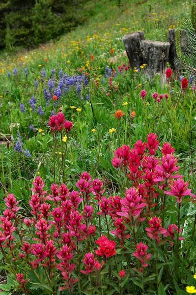 Photograph - Rocky Mountain Wildflowers by Lynn Bauer