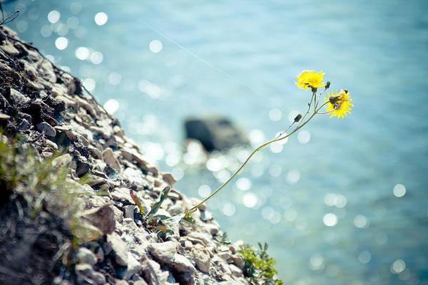 Photograph - Rocky Ocean Flower  by Raimond Klavins