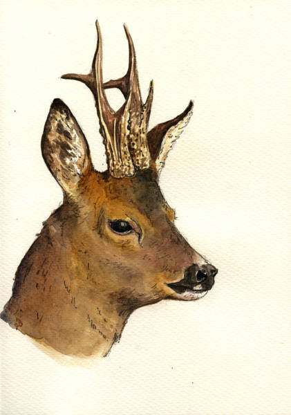 Deer Wall Art - Painting - Roe Deer Head Study by Juan  Bosco