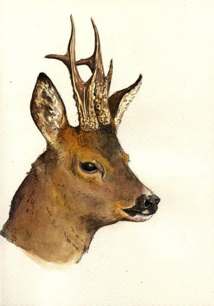 Head Painting - Roe Deer Head Study by Juan  Bosco