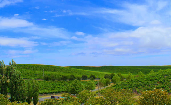 Photograph - Rolling Hills by Rima Biswas