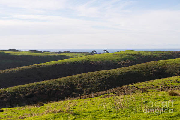 Wing Back Photograph - Rolling Landscape Hills Of Point Reyes National Seashore California Dsc2408 by Wingsdomain Art and Photography