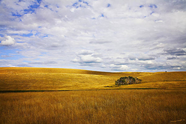 Wall Art - Photograph - Rolling Prairie by Theresa Tahara