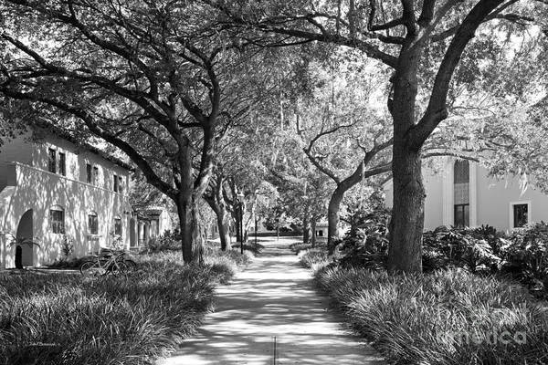 Photograph - Rollins College Landscape by University Icons