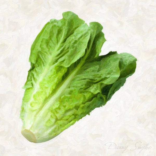 Wall Art - Painting - Romain Lettuce  by Danny Smythe