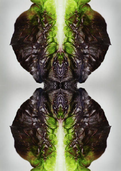 Vertical Abstract Photograph - Romaine Lettuce by Silvia Otte