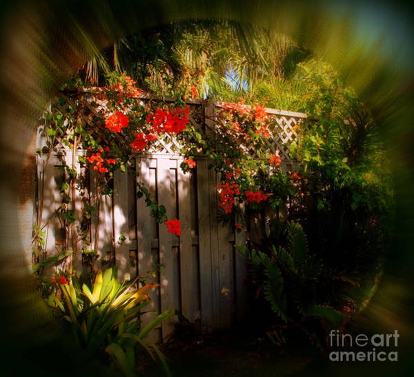 Photograph - Romantic Hideaway In Key West by Susanne Van Hulst