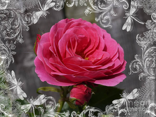 Photograph - Romantic Rose by Brenda Kean