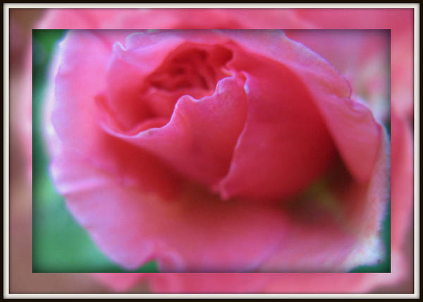 Photograph - Romantic Rose by Charmaine Zoe