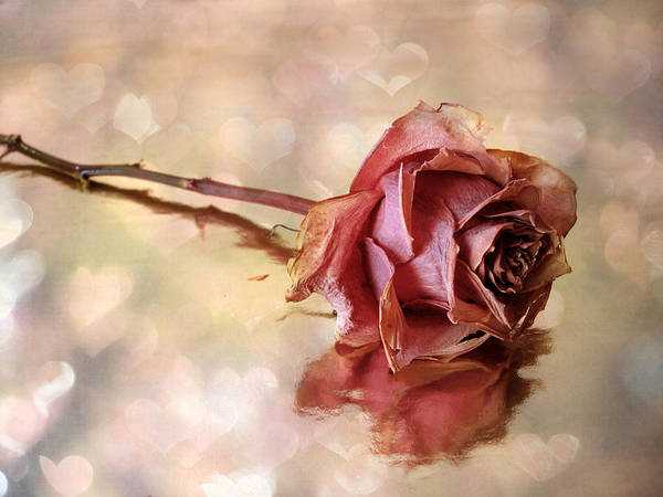 Photograph - Romantic Rose by Jessica Jenney