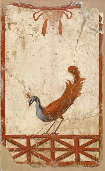 Wall Art - Painting - Rome Peacock, C70 by Granger