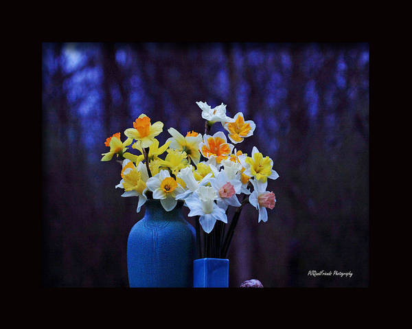 Rookwood Wall Art - Photograph - Rookwood And Daffodils by PJQandFriends Photography