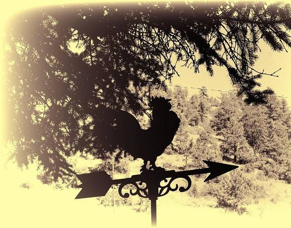 Wind Vane Digital Art - Rooster by Audreen Gieger