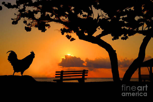 Photograph - Rooster Enjoying A Sunrise On The Beach by Dan Friend