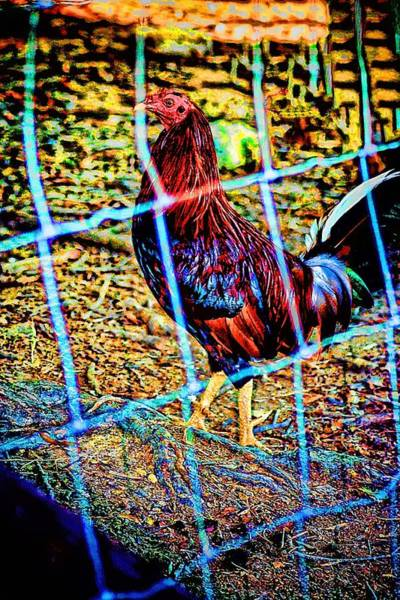 Photograph - Rooster Red Art by Lesa Fine