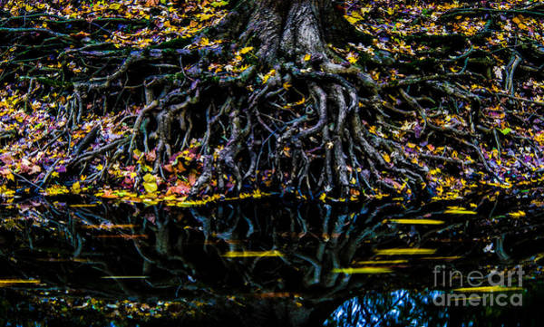 Photograph - Rooted In Color by Michael Arend
