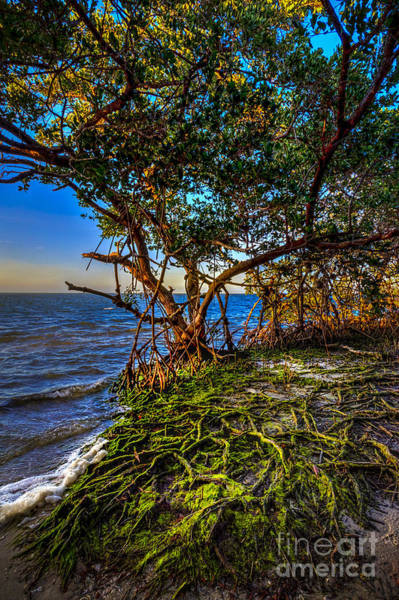 Palmetto Photograph - Rooted In Truth by Marvin Spates