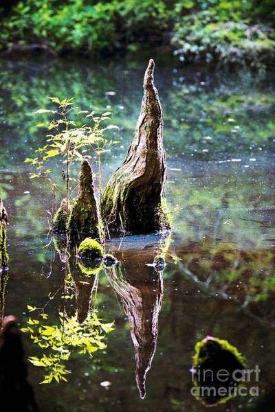 Cypress Knees Photograph - Rooted by Katya Horner