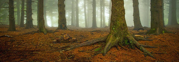 Photograph - Rooted-pano by Joye Ardyn Durham