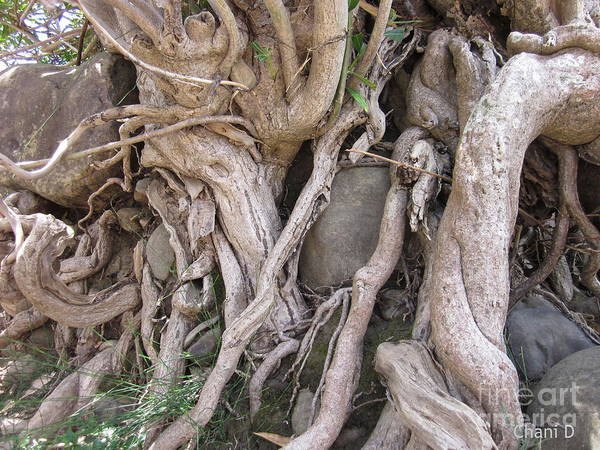 Photograph - Roots by Chani Demuijlder