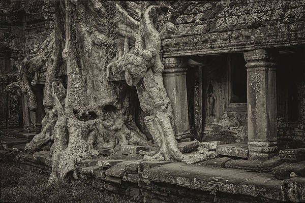 Roots In Ruins 7, Ta Prohm, 2014 Art Print