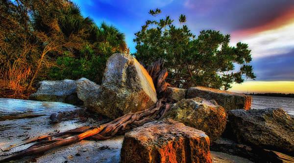Mangroves Digital Art - Roots Of Life by Angel H Juarbe