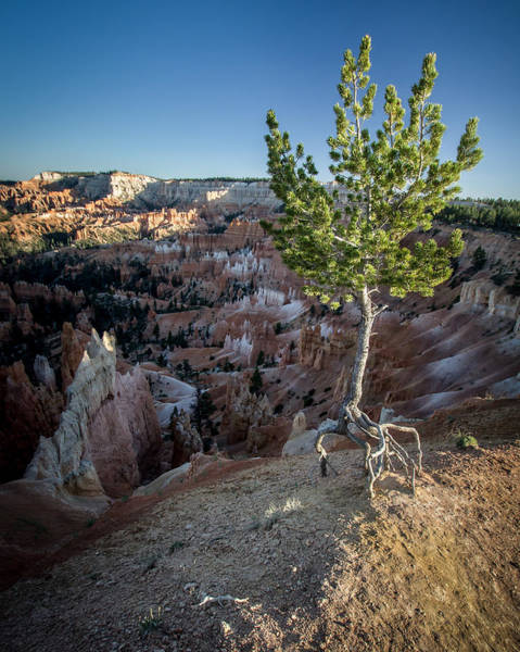 Photograph - Roots On The Rim 2 by Dwight Theall