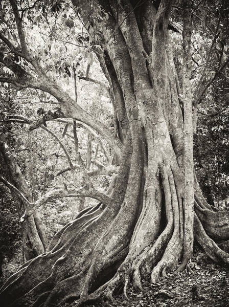 Photograph - Roots by Paul Cowan