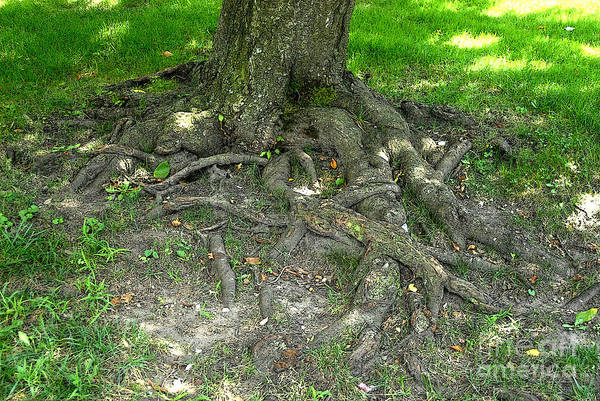 Photograph - Tree Roots by Walter Neal