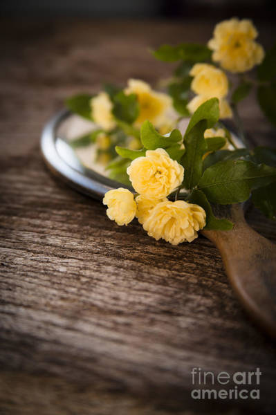 Wall Art - Photograph - Rosa Banksiae Lutea by Jan Bickerton