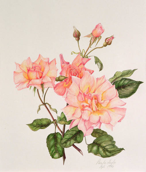 Single Rose Painting - Rosa Compassion by Pamela A Taylor