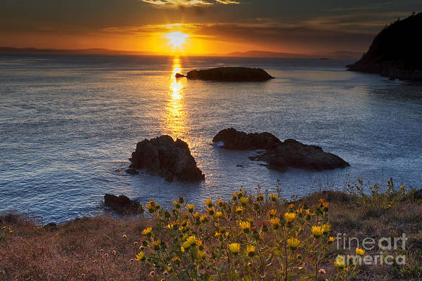Flower Head Photograph - Rosario Head Sunset by Mark Kiver