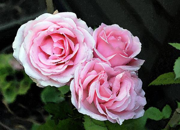 Photograph - Rose 3 by Helene U Taylor