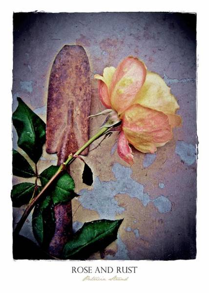 Photograph - Rose And Rust by Patricia Strand
