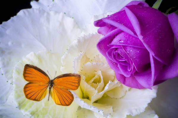 Orange Rose Photograph - Rose Butterfly With Kale by Garry Gay