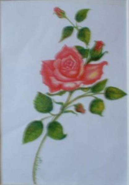 Drawing - Rose Confection by Regina Taormino