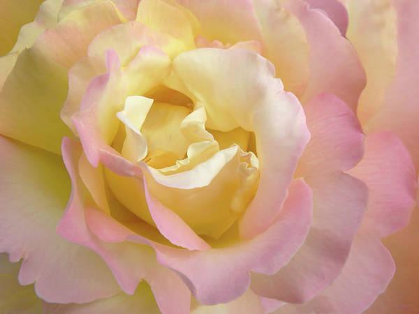 Jennie Photograph - Rose Flower Parfait by Jennie Marie Schell