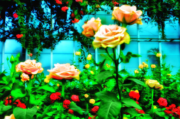 Longwood Gardens Photograph - Rose Garden by Bill Cannon