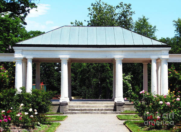 Photograph - Rose Garden Pergola In Delaware Park Buffalo Ny Oil Painting Effect by Rose Santuci-Sofranko