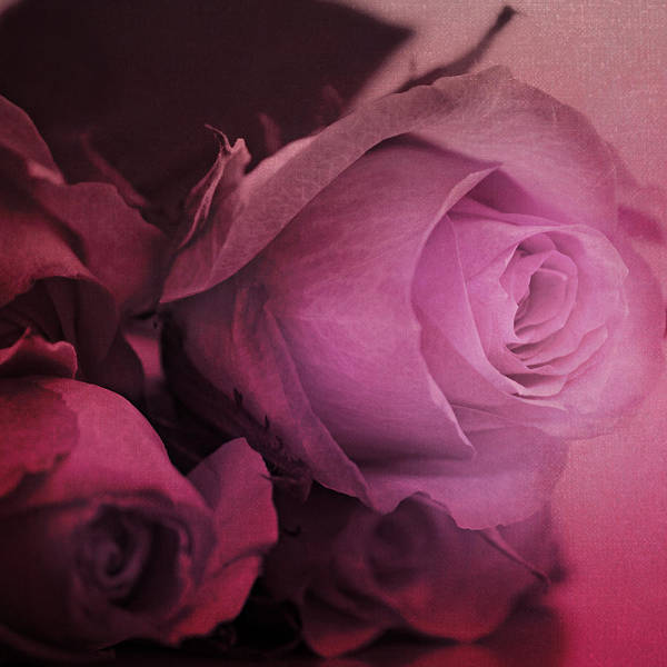 Love Letter Mixed Media - Rose by Heike Hultsch