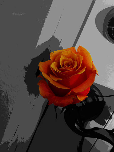 Photograph - Rose II - Secret Admirer by Xueling Zou