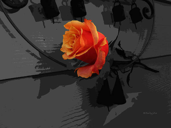 Photograph - Rose IIi - A Message by Xueling Zou