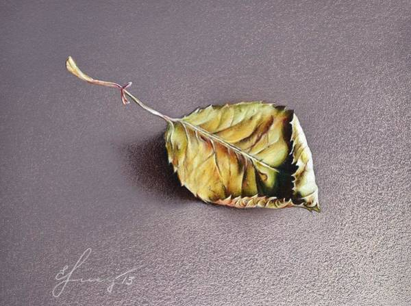 Drawing - Rose Leaf by Elena Kolotusha