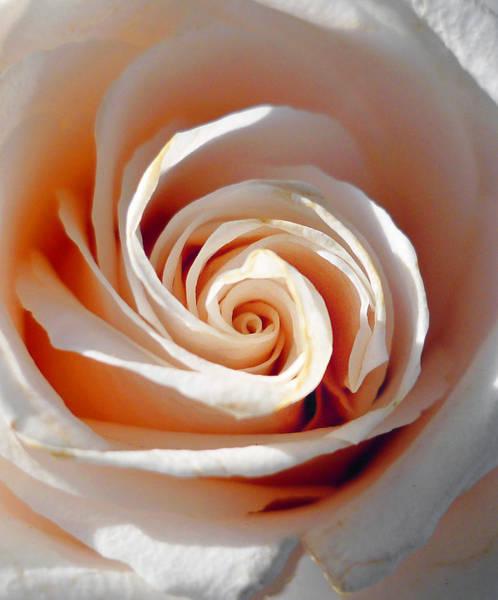Yellow Rose Photograph - Rose Magnificent Spiral  by Irina Sztukowski