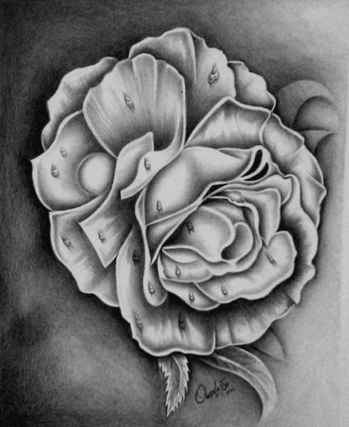 Drawing - Rose by Owen Lafon